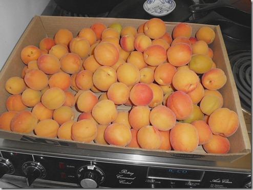 2012 210 apricots